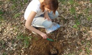 Как посадить дерево своими руками