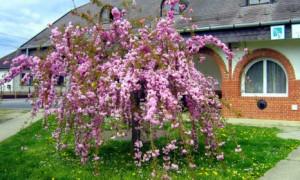 Что такое топиарий или как самостоятельно сделать декоративные деревья?