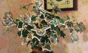 Способы создания денежных деревьев своими руками