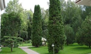 Как выбрать деревья для высаживания на загородном участке?