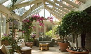 Как самостоятельно сделать зимний сад?