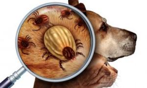 Как защитить питомцев от паразитов в летний период?