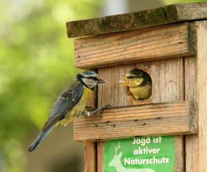 Птицы в скворечнике
