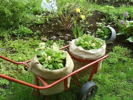 Садовая тележка с цветами