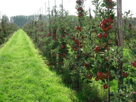 Плодоносный сад