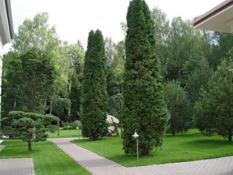 Деревья на загородном участке