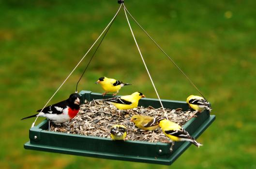 Как самостоятельно сделать кормушку для птиц