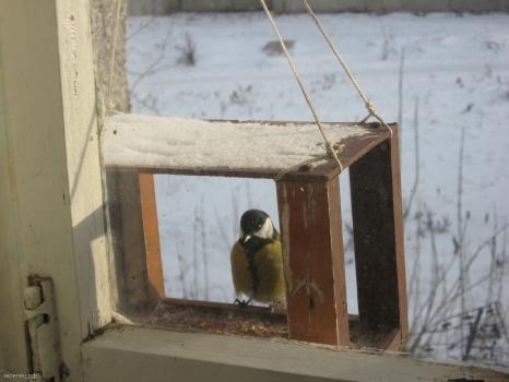 Кормушка у окна