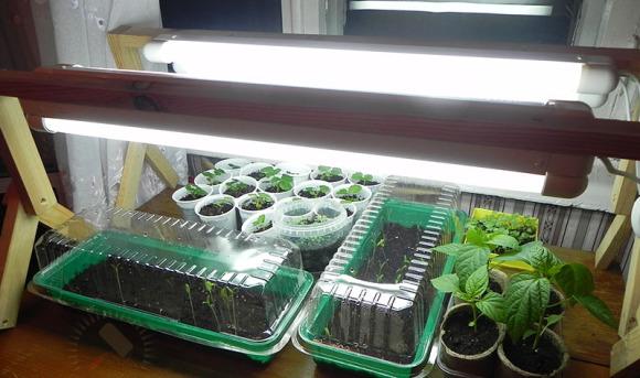 Освещение огорода на подоконнике