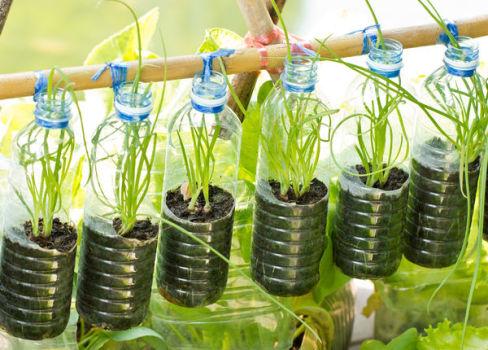 Как разбить комнатный огород своими руками?
