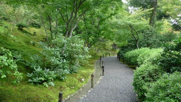 Лес в саду