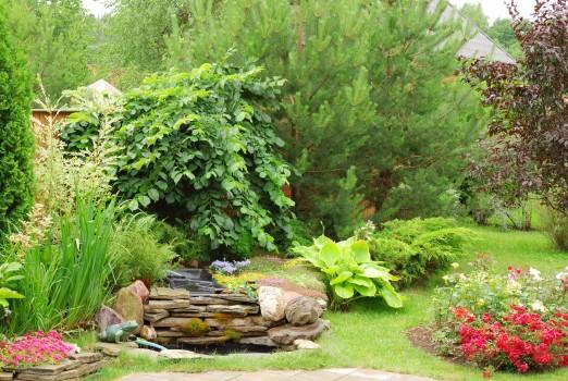 Расположение растений в будущем саду