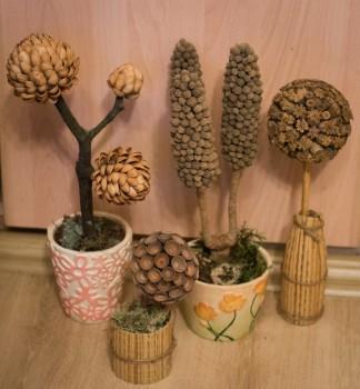 Готовые кофейные деревья