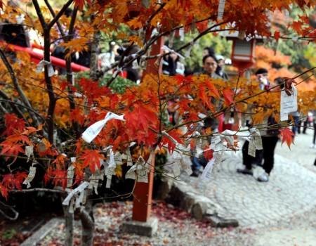 Дерево желаний в Японии