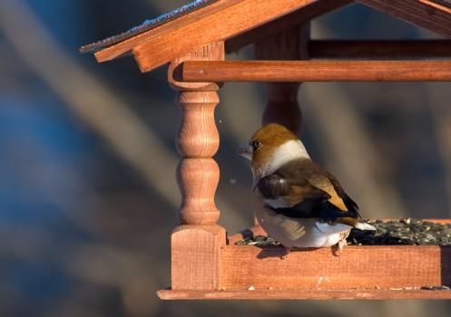 Кормушка с птицей