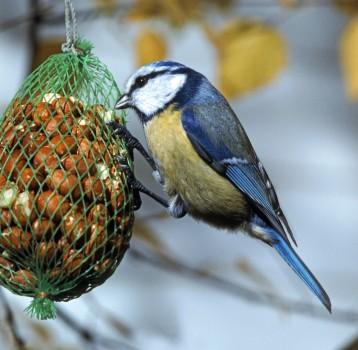 Что следует знать о кормлении птиц зимой?