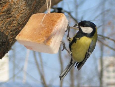 Сало для птиц